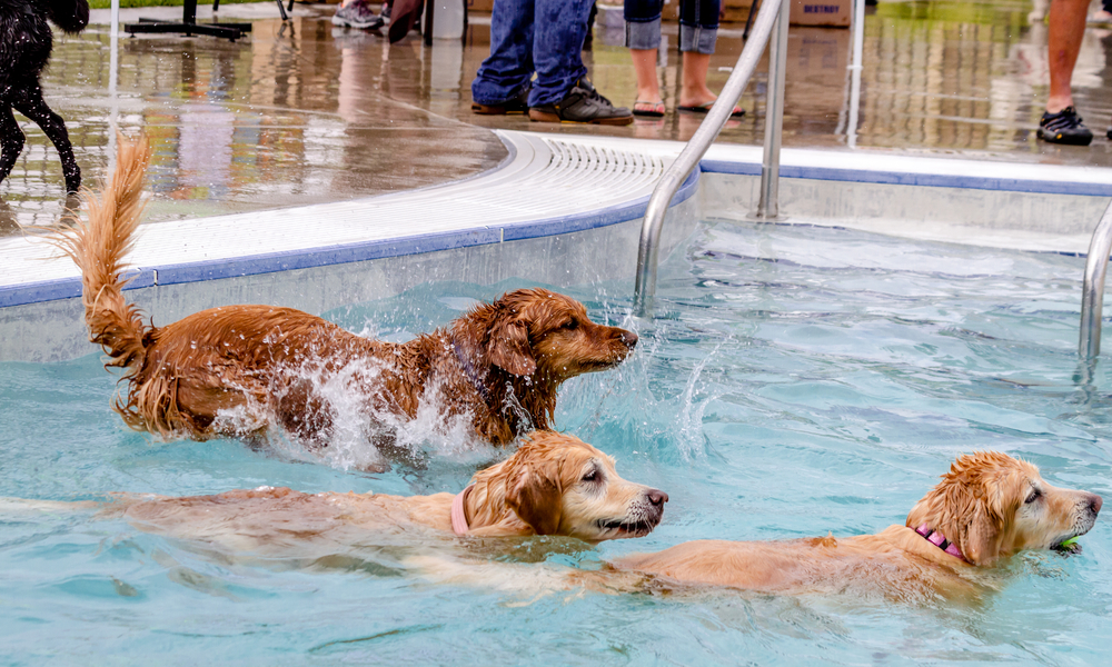 Have Fun In The Pool With Your Dogs