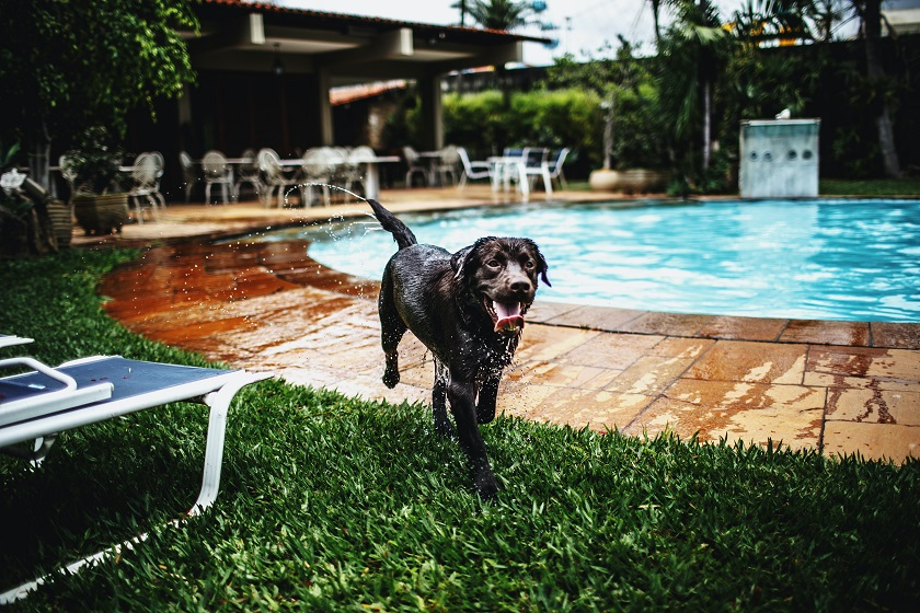 How To Enjoy The Dog Days Of Summer In The Pool